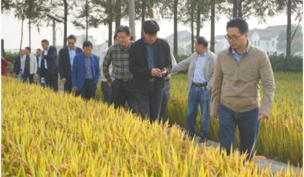 杭州种业集团晚粳稻新品种综合性状表现抢眼