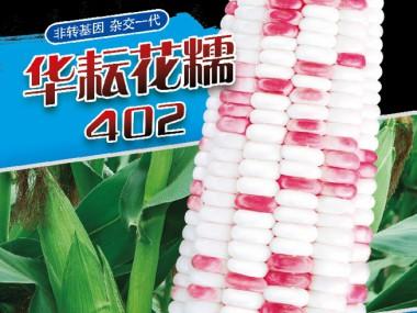 华耘花糯402