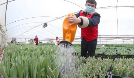 浙江安吉:青年志愿者助力鲜花销售