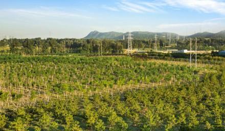 """昌平区今年计划新增造林1.6万亩 35种节水植物优先""""上岗"""""""