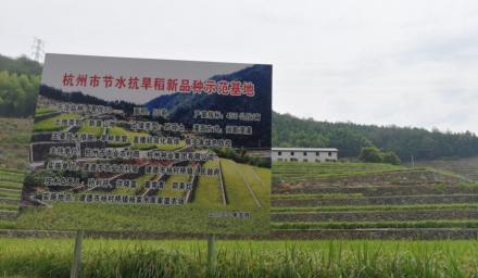 稳粮扩面杭州种业在行动