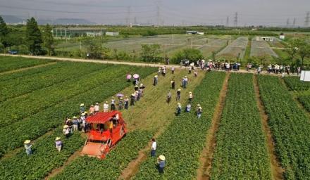 种业振兴在行动:科技赋能助力'浙鲜9号'实现亩产突破一千公斤